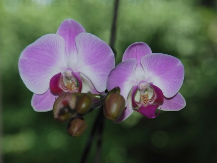 090629_Orchidee-01-small